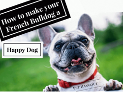 How to make your French Bulldog a Happy Dog