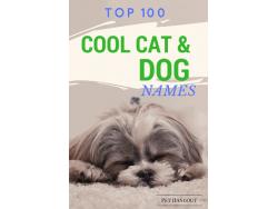 Top 100 Cool Dog & Cat Names