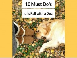 10 Must Do's this Fall with a Dog