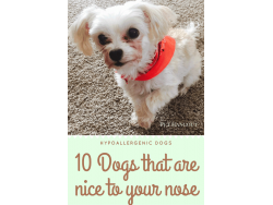 Dogs that are Nice to your Nose