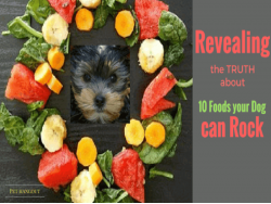 Revealing the Truth about 10 Foods Your Dog can ROCK!