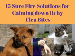 15 Sure Fire Solutions for Calming down Itchy Flea Bites