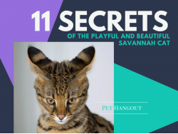 11 Little Secrets of the Playful and Beautiful Savannah Cat