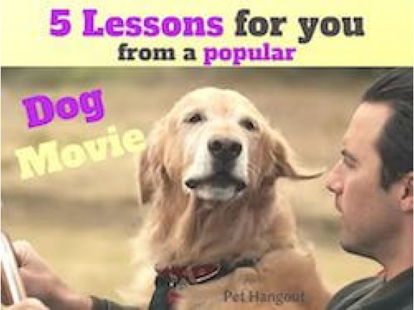 5 Lessons For You From a Popular Dog Movie