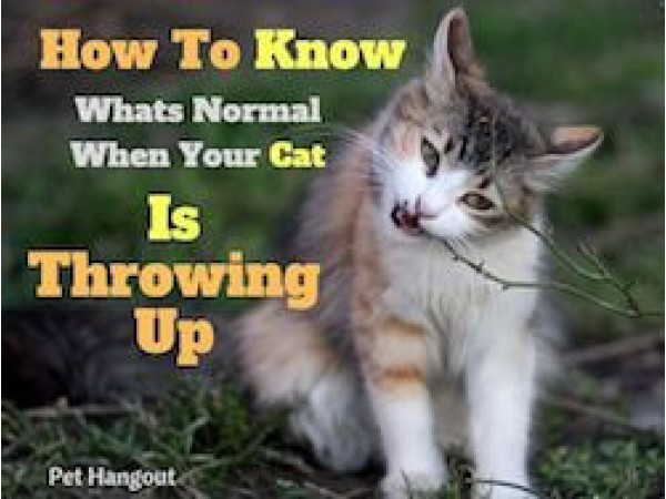 How To Know Whats Normal When Your Cat Throws Up