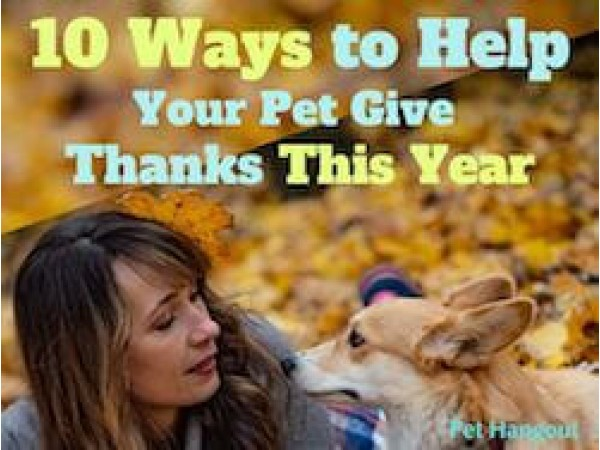 10 Ways to Help Your Pet Give Thanks This Year