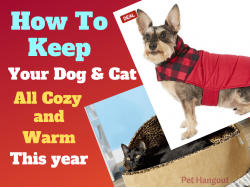 How to Keep Your Dog & Cat all Warm And Cozy This Year