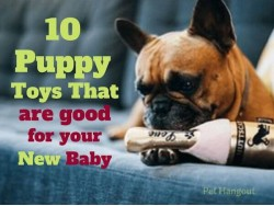 10 Puppy Toys That Are Good For Your New Baby