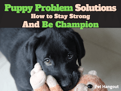 Puppy Problem Solutions How to Stay Strong and Be Champion