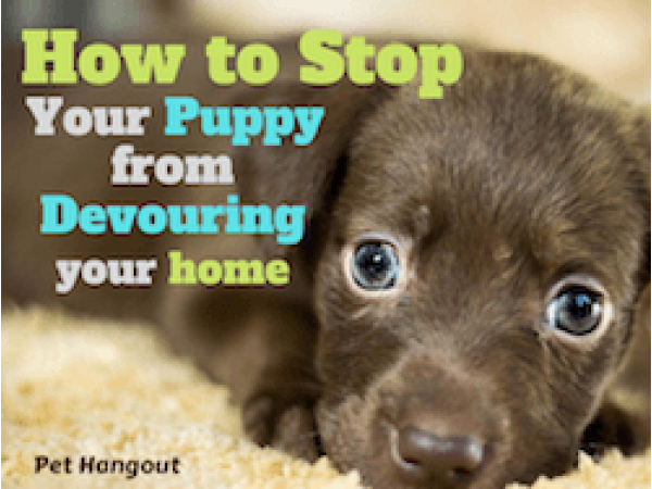 How to Stop Your Puppy from Devouring Your Home