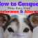 How to Conquer Your Dog's Food Intolerance and Allergies