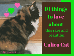 10 Things to Love about this Rare and Beautiful Calico Cat
