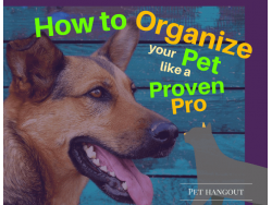 How to Organize your Pet like a Proven Pro