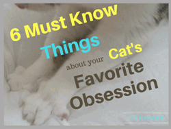 6 Must Know Things about your Cats Favorite Obsession