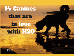 14 Canines that are in Love with H2O