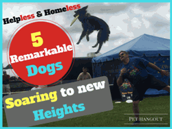 Helpless & Homeless - 5 Remarkable Dogs Soaring to New Heights
