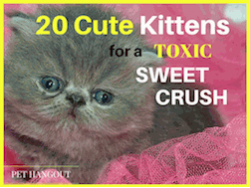 20 Cute Kittens for a Toxic Sweet Crush