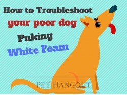 How to Troubleshoot your Poor Dog Puking White Foam