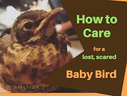 How to Care for a Lost, Scared Baby Bird