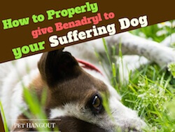 How to Properly give Benadryl to your Suffering Dog