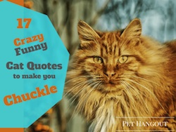 17 Crazy Funny Cat Quotes to Make You Chuckle