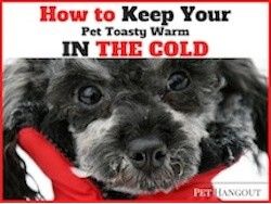 How to Keep Your Pet Toasty Warm in the Cold