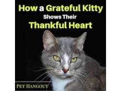 How a Grateful Kitty Shows Their Thankful Heart