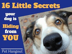 16 Secrets Your Dog is Hiding from You