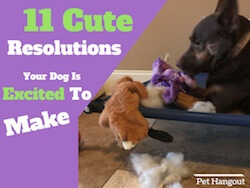 11 Cute Resolutions Your Dog Is Excited To Make