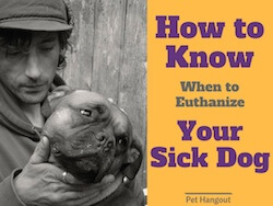 How To Know When to Euthanize Your Sick Dog
