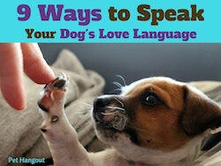 9 Ways You Can Speak Your Dog's Love Language