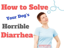 How To Solve Your Dog's Horrible Diarrhea