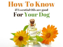 How to Know If Essential Oils are Good For Your Dog