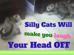 Silly Cats Will Make You Laugh Your Head Off