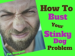 How To Bust Your Stinky Dog Problem