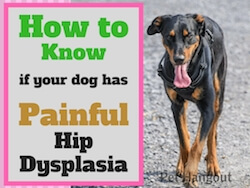 How to Know if Your Dog Has Painful Hip Dysplasia