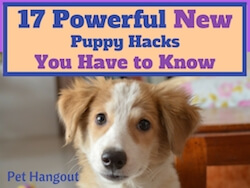 17 Powerful New Puppy Hacks You Have to Know