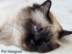 How to Make Your Crazy Lazy Cat Go Wild