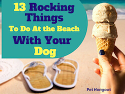13 Rocking Things To Do At The Beach With Your Dog