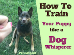 How to Train Your Puppy Like A Dog Whisperer