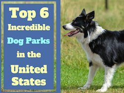 Top 6 Incredible Dog Parks in the United States