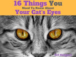 16 Things You Need to Know about Your Cat's Eyes