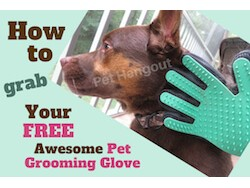 How to Get Your FREE Awesome Pet Grooming Glove