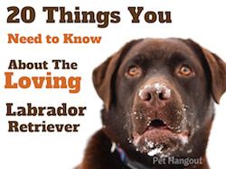 20 Things You Need to Know about the Loving Labrador Retriever