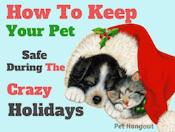 How To Keep Your Pet Safe During The Crazy Holidays