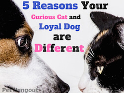 5 Reasons Your Curious Cat And Loyal Dog Are Different