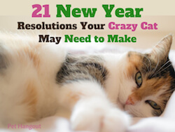 21 New Year Resolutions Your Crazy Cat May Need to Make