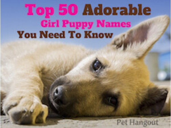 Top 50 Adorable Girl Puppy Names You Need To Know