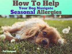 How To Help Your Dog Navigate Seasonal Allergies