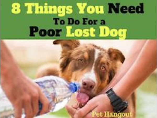 8 Things You Need To Do For A Poor Lost Dog